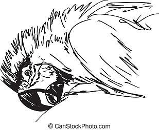 croquis, de, macaw, bird., vecteur, illustration