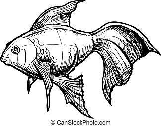 Gravure poisson rouge illustration gravure - Croquis poisson ...