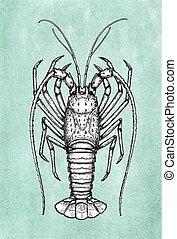 croquis, encre, épineux, lobster.