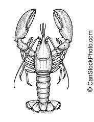 croquis, encre, lobster.