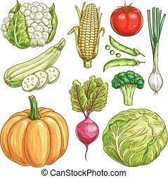 croquis, ensemble, icônes, ferme, Légumes, isolé, vecteur