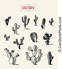 croquis, ensemble, illustration, main, vecteur, dessiné, cactus