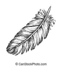 croquis, extérieur, perdu, élément, vecteur, plume, oiseau