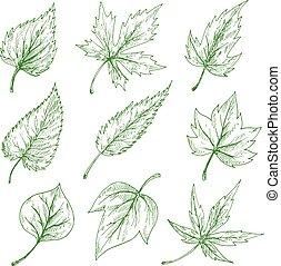 croquis, feuilles vertes, ensemble, arbre