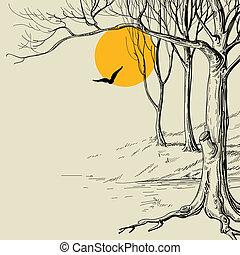 croquis, forêt, lune