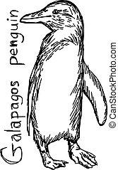 croquis, galapagos, -, isolé, illustration, main, lignes, vecteur, arrière-plan noir, dessiné, blanc, manchots