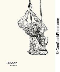 croquis, graphique, gibbon, drawing., vecteur, singe