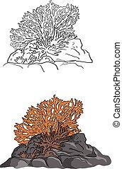 croquis, griffonnage, corail, lignes, isolé, illustration, main, vecteur, arrière-plan noir, dessiné, blanc