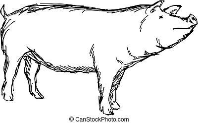 croquis, griffonnage, lignes, isolé, illustration, main, vecteur, arrière-plan noir, dessiné, blanc, cochon
