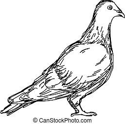 croquis, griffonnage, pigeon, isolé, illustration, main, vecteur, arrière-plan noir, dessiné, lignes blanches