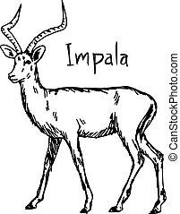 croquis, -, isolé, illustration, main, lignes, vecteur, arrière-plan noir, dessiné, blanc, impala
