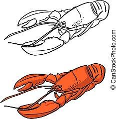croquis, mer, griffonnage, lignes, isolé, illustration, main, vecteur, homard, fond, orange, dessiné, blanc, noir