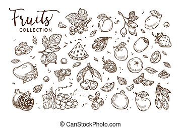 croquis, naturel, sépia, collection, savoureux, fruits, ...