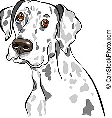 croquis, race, chien, vecteur, closeup, portrait, dalmatien