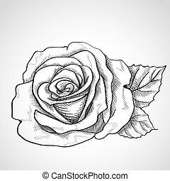 Rose Noir Sketch Contour Sketch Rose Illustration Arriere