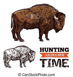 croquis, taureau, buffle, animal, bœuf, sauvage, bison, ou