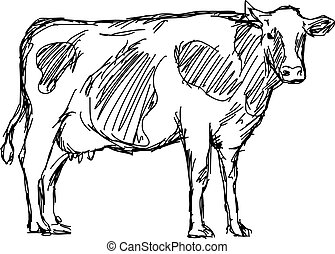 croquis, vache, griffonnage, lignes, isolé, illustration, main, vecteur, arrière-plan noir, dessiné, blanc