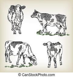 croquis, vache, set., style, illustration, main, vecteur, dessiné, lait