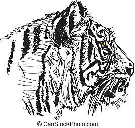 croquis, vecteur, blanc, illustration, tiger.
