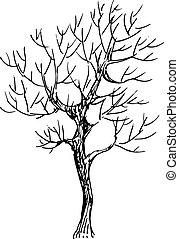 croquis, vecteur, illustration, arbre., noir, blanc