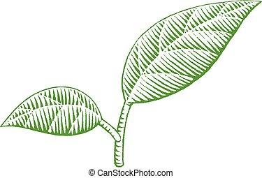 croquis, vectorized, feuilles, illustration, vert, encre