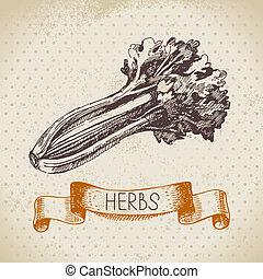 croquis, vendange, main, céleri, herbes, fond, dessiné,...