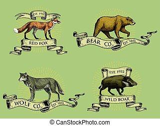 croquis, vieux, logos, verrat, insignes, style, vendange, emblèmes, retro, dessiné, rubans, rouges, ours, main, engraving., animaux, renard, loup gris, sauvage, bannières, ou