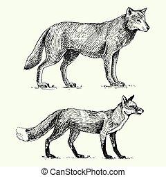 croquis, vieux, vendange, renard, gris, main, loup, dessiné, animaux sauvages, gravé, rouges, style