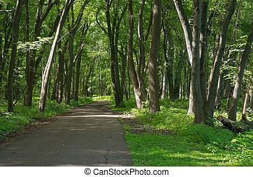 Crosby Farm Woodland Trail - vibrant green of forest foliage...