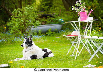 Cross breed dog in a summer garden