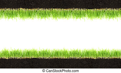 Cross-section frame of soil and grass isolated on white