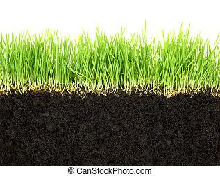 cross-section, i, jord, og, græs, isoleret, på hvide,...