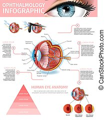 Cross Section of Human Eye Anatomy Structure.