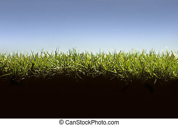 Cross section of lawn showing blades of grass at ground level