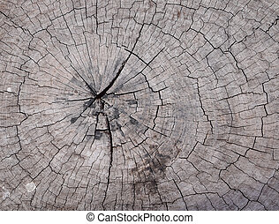 Cross section of stump tree trunk showing growth rings.