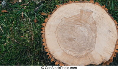 Cross section of the tree. Unusual pattern on the cut of a...