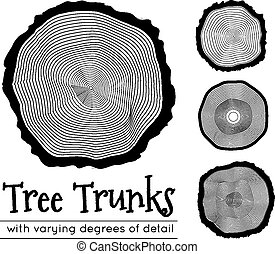 Cross section of the trunk, vector illustration