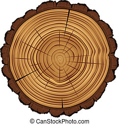 Cross section of tree stump isolated on white - Cross...