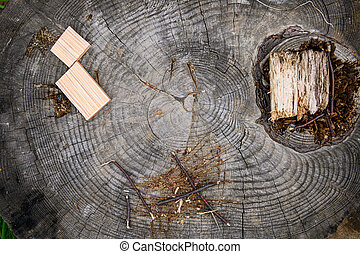 Cross section of tree trunk., close-up wooden cut texture.
