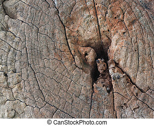 Cross section of tree trunk showing growth rings,texture background