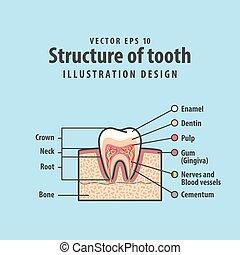 cross-section, struktur, inderside, tand, diagram, og, kort,...