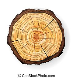 Cross Section Tree Wooden Stump Vector. Round Cut With...