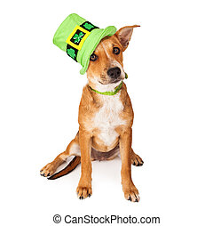 Crossbreed Puppy Wearing St Patricks Day Hat - A cute young...
