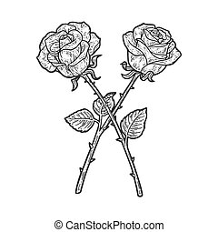 Crossed rose flowers sketch engraving vector illustration. T-shirt apparel print design. Scratch board imitation. Black and white hand drawn image.