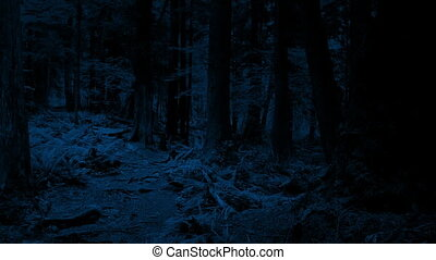 Crossing Woodland Path At Night - Sideways moving across a...
