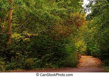crossroad in autumn forest