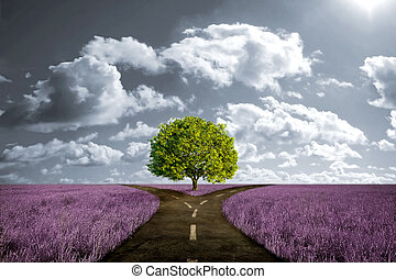 Crossroad in lavender meadow and with tree alone