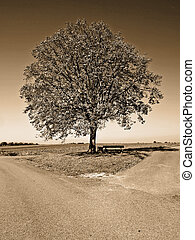 crossroad with tree