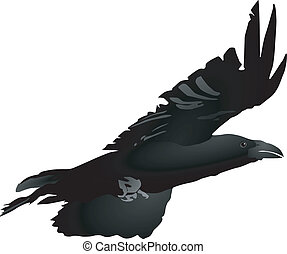 crow 1 - vector image of a crow