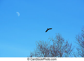 Crow and moon in the sky